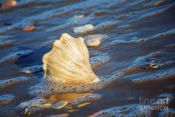 Treasure Hunt Wall Art - Photograph - Gift Of The Sea by Sharon McConnell
