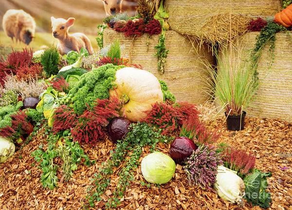 Photograph - Gifts Of Autumn by Marina Usmanskaya
