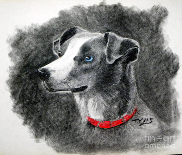 Wall Art - Drawing - Ginger In Charcoal by Terri Mills