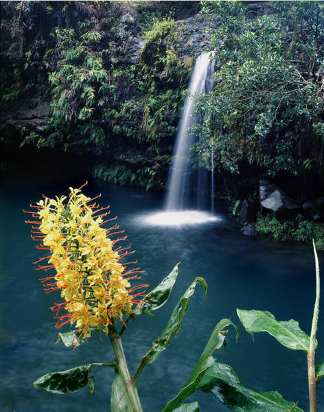 Photograph - 100638-ginger Lily And Hawaiian Waterfall  by Ed  Cooper Photography