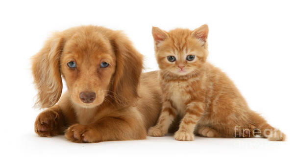 Photograph - Ginger Pals by Warren Photographic