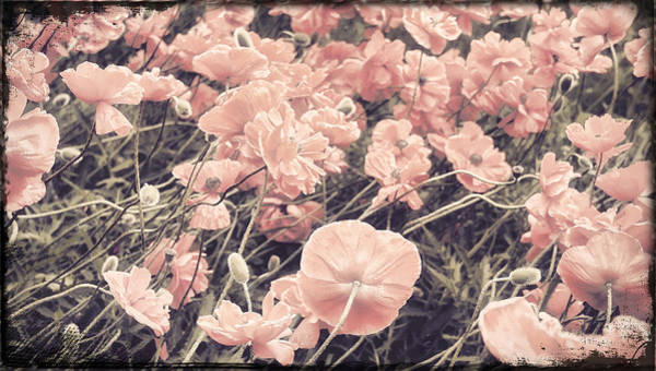 Pavot Wall Art - Painting - Ginger Poppies II by Mindy Sommers