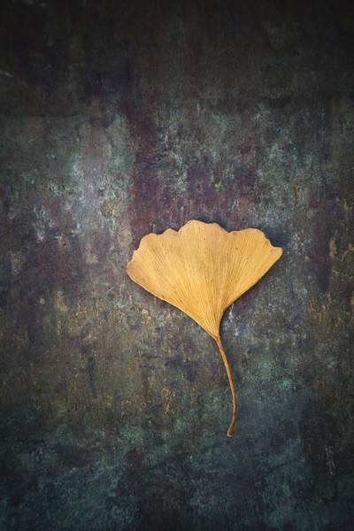 Photograph - Gingko Leaf by Maria Heyens
