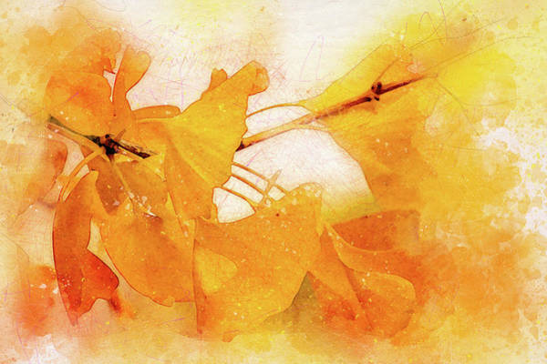 Wall Art - Digital Art - Ginkgo Abstraction by Terry Davis