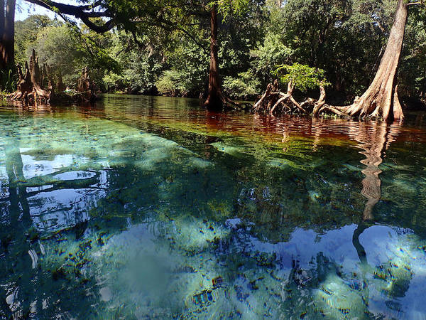 Photograph - Ginnie Springs by Farol Tomson