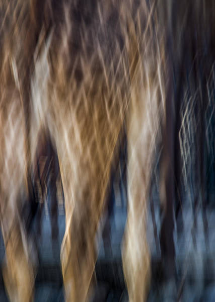 Photograph - A Wildlife Abstract by James Woody