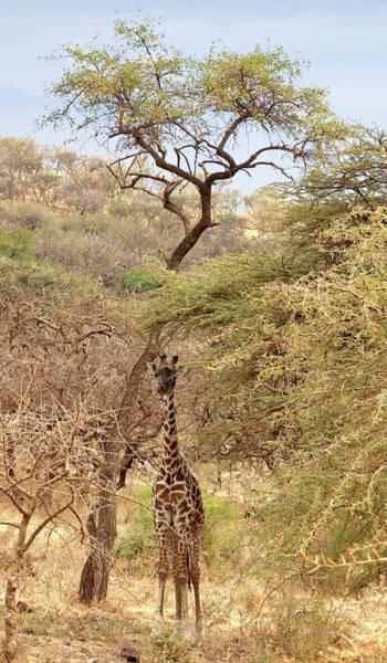 Colorful Giraffe Photograph - Giraffe Camouflage by Gill Billington