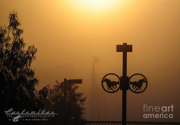 Norco Photograph - Giraffe In Sunbathed Fog by Customikes Fun Photography and Film Aka K Mikael Wallin