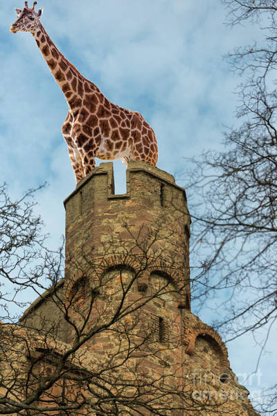 Photograph - Giraffe On Fort by Les Palenik