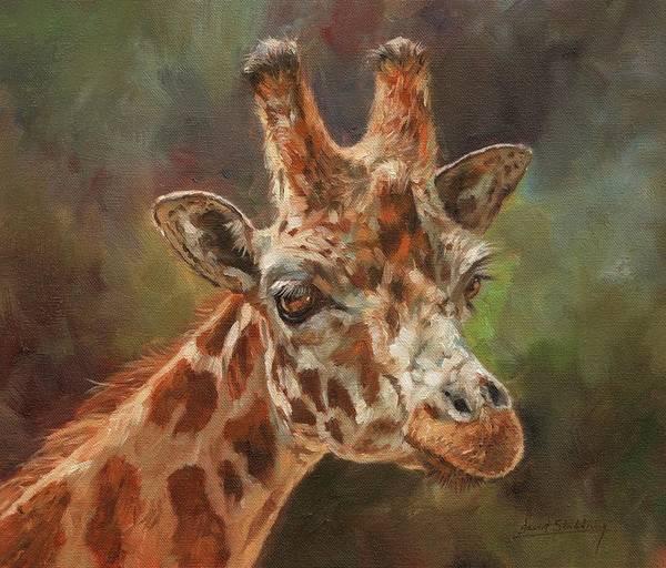 Painting - Giraffe Portrait by David Stribbling