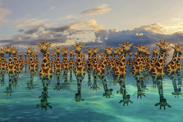 Sea View Digital Art - Giraffes  by Betsy Knapp