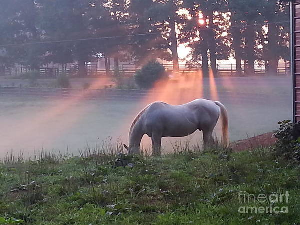 Photograph - Gitchie And The Sunrise by Rabiah Seminole