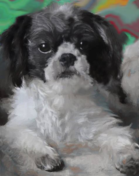 Painting - Gizmo-painted by Ericamaxine Price