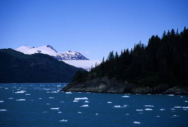 Gulf Of Alaska Photograph - Glacial Ice Floats In The Prince by Stacy Gold
