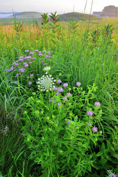 Photograph - Glacial Park Kames And Prairie Wildflowers At Sunrise by Ray Mathis