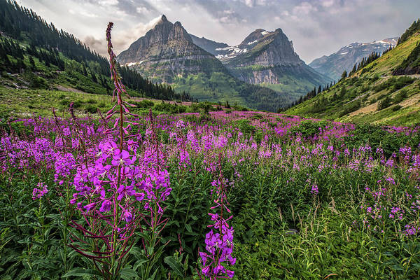 Fireweed Photograph - Glacier In Summer by Peter Tellone
