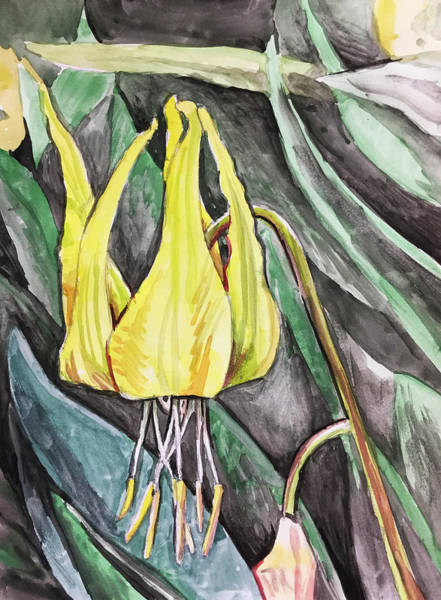 Painting - Glacier Lily by Aaron Spong