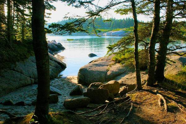 Glade To The Side Of Sand Beach Art Print