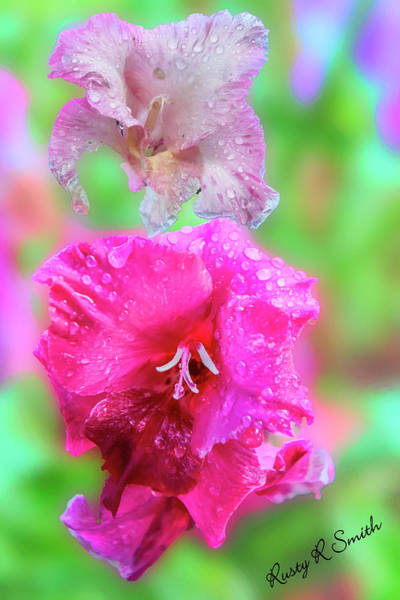 Digital Art - Gladiola Blossoms In The Rain. by Rusty R Smith