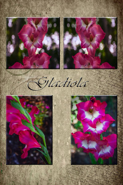 Photograph - Gladiola Collage by Judy Hall-Folde
