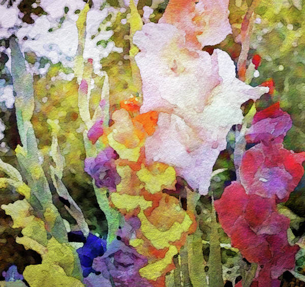 Mixed Media - Gladiola Rainbow by Susan Maxwell Schmidt