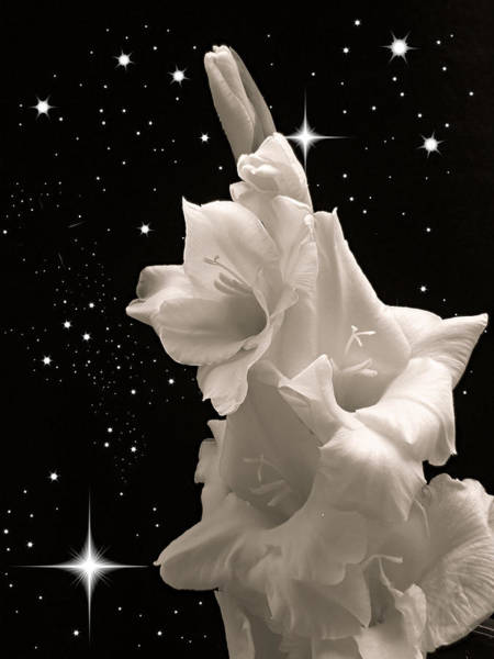 Wall Art - Photograph - Gladiolas In Space by Farol Tomson