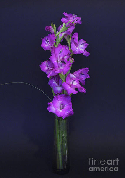 Flowers In A Vase Photograph - Gladiolus by Brian Roscorla