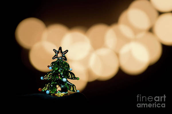 Wall Art - Photograph - glass Christmas tree by Masako Metz