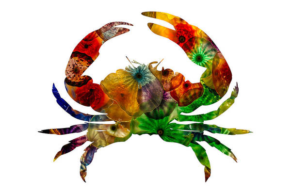 Photograph - Glass Crab by Michael Colgate