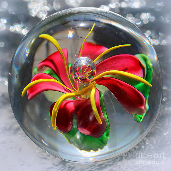 Photograph - Glass Flower Ice Square by Karen Adams