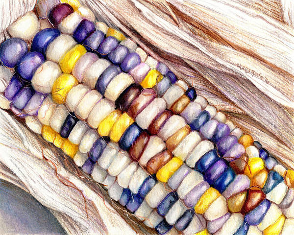 Indian Corn Drawing - Glass Gem Corn by Shana Rowe Jackson