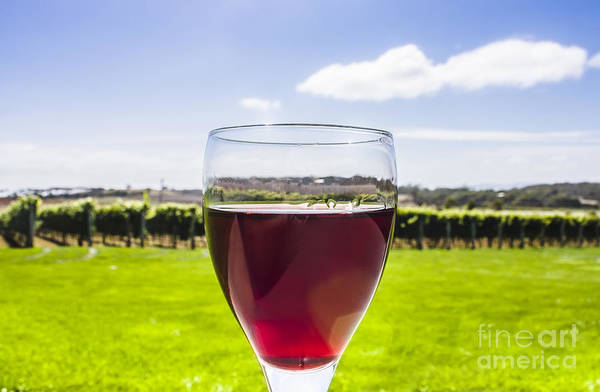 Italian Wine Photograph - Glass Of Red Merlot Wine. Wineries And Vineyards by Jorgo Photography - Wall Art Gallery