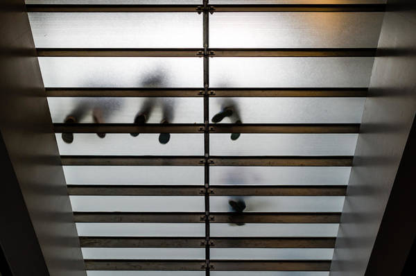 Photograph - Glass Stairs by M G Whittingham
