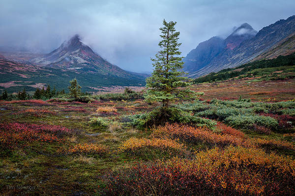 Photograph - Glen Alps In The Autumn Rain by Tim Newton