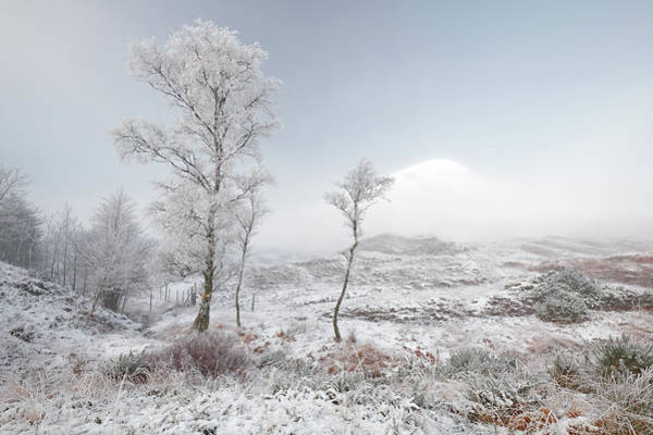 Photograph - Glen Shiel Misty Winter Trees 2 by Grant Glendinning