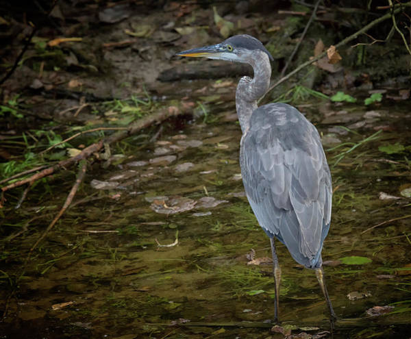 Photograph - Glendale Heron by Randy Hall