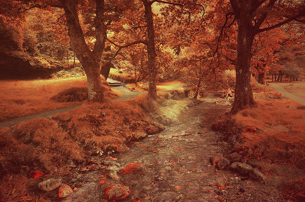 Photograph - Glendalough Stream. Ireland. Golden Series Fairyland by Jenny Rainbow