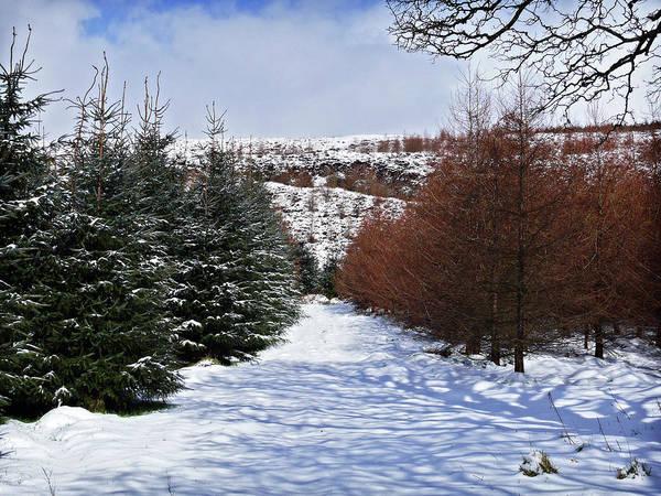 Photograph - Glenshane Pass Roadside by Colin Clarke