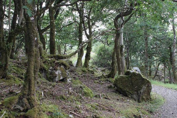 Photograph - Glenveagh National Park 4316 by John Moyer