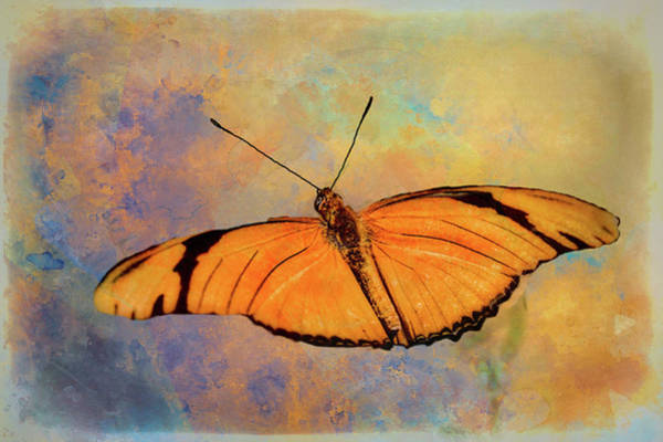 Wall Art - Photograph - Glide Path by Ches Black