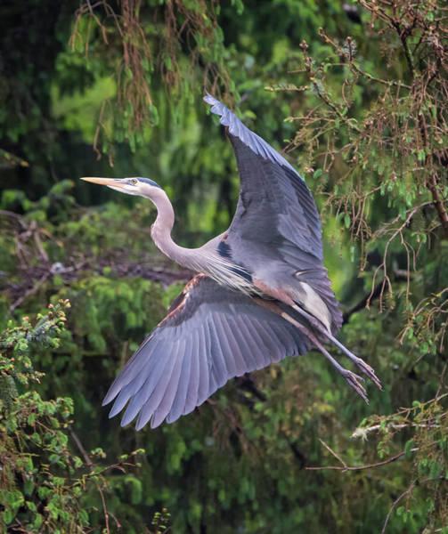 Photograph - Gliding by Loree Johnson