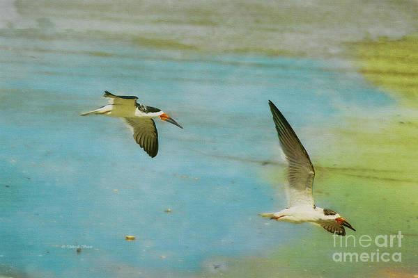 Painting - Gliding Skimmers by Deborah Benoit