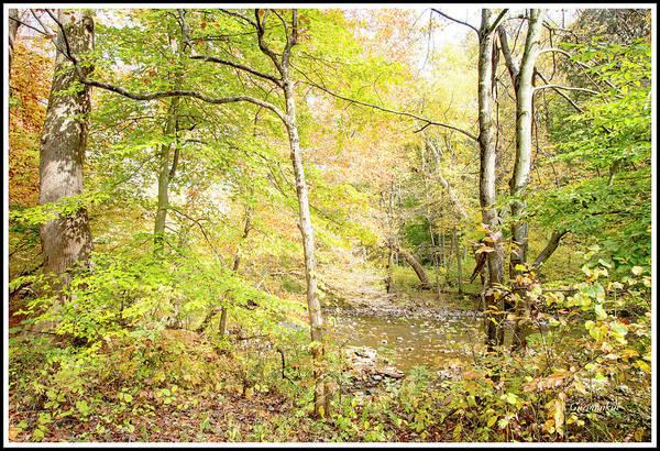 Glimpse Of A Stream In Autumn Art Print