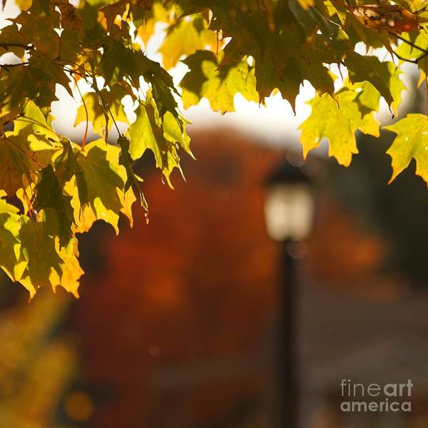 Wall Art - Photograph - Glimpse Of Autumn by Aimelle