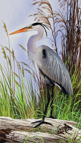 Wall Art - Painting - Glimpse Of Natures Beauty by James Williamson