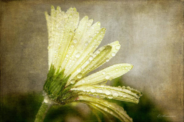Photograph - Glistening After The Rain by Eleanor Abramson