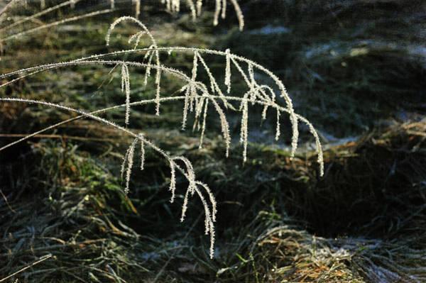 Photograph - Glitter And Textures by Randi Grace Nilsberg