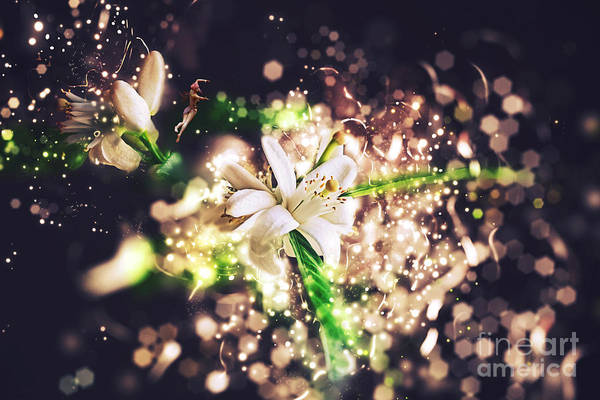 Photograph - Glitter Blossoms by Elle Arden Walby