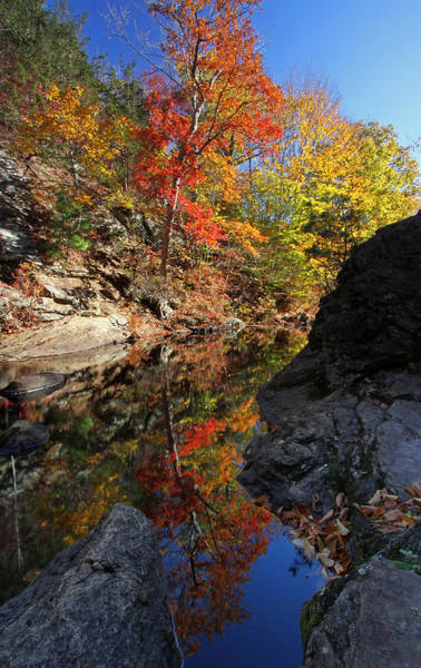 Photograph - Glorious Connecticut Fall Foliage by Juergen Roth
