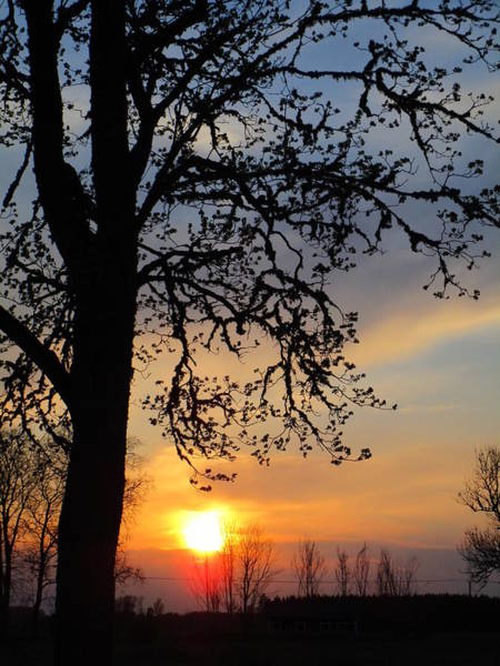 Photograph - Glorious Evening by Rosita Larsson
